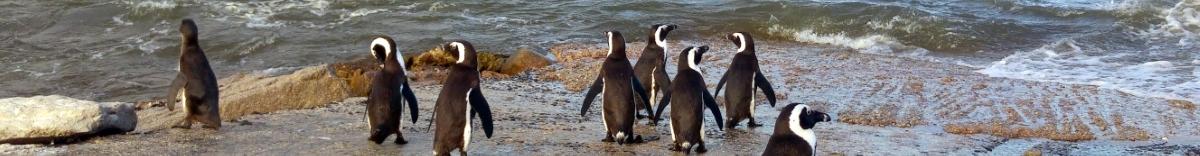 סטריפ פינגווינים
