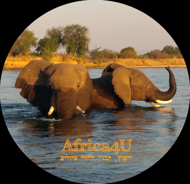 לוגו פיל