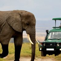 Game-Drives-in-Akagera-National-Parks